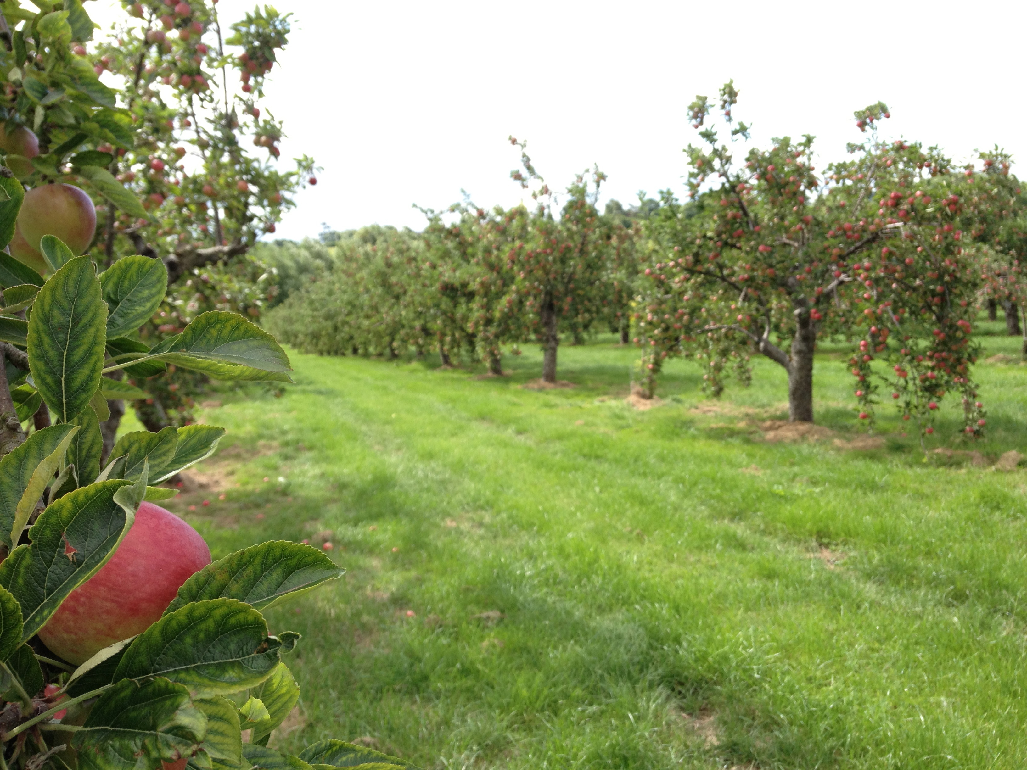 applewood orchard