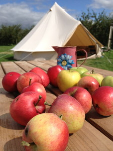glamping: bell tents